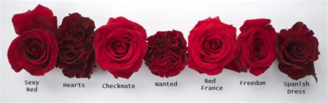 Shades Of Grey Colors red rose study flirty fleurs the florist blog