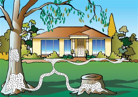 house pest control termites control sydney detection safe eradication and