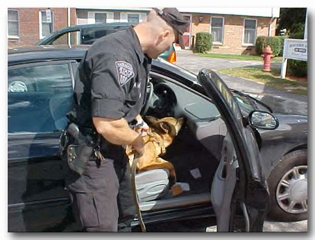 Conducting A Search While Employed Working Program Scrapbook German Shepherd Rescue Of