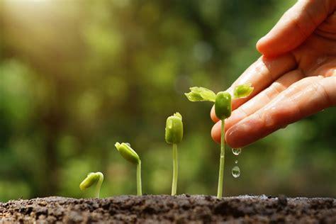 Growing Plant For Panduan Untuk Peduli Mengenal menanam benih pohon eizil