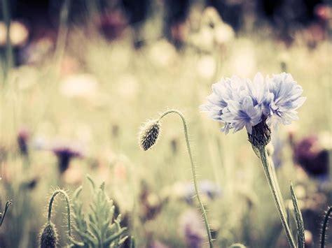imagenes fondo de pantalla vintage vintage flores fondo de pantalla fondos de pantalla gratis