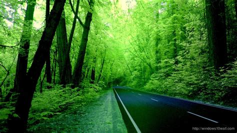 wallpaper green road forest windows 10 wallpapers