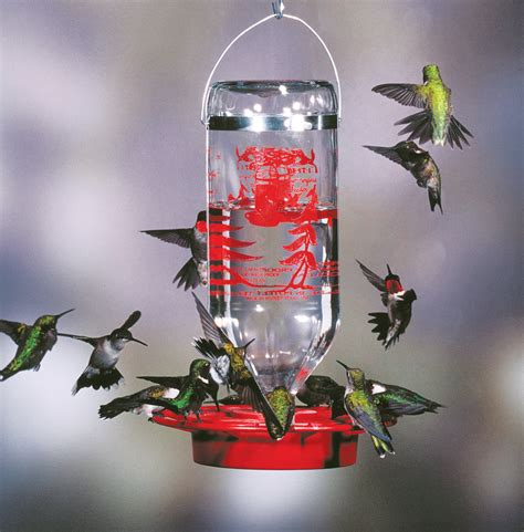 best 1 hummingbird feeder glass feeders the last straw