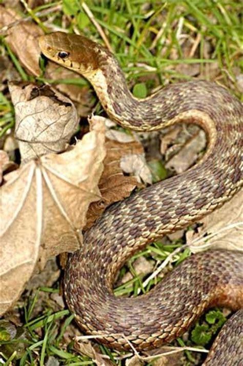 Garden Snake Pa Wildlife Friends Of Salt Springs Park