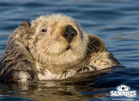 fishing boat sea otter help sea otters win a boat wilderness systems