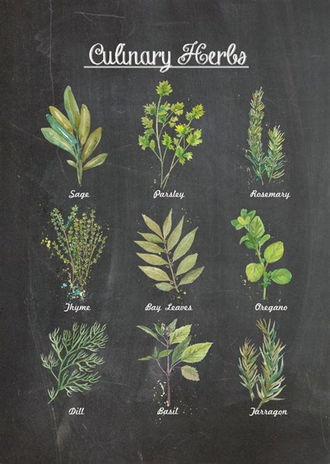culinary herbs chalkboard wall poster decor