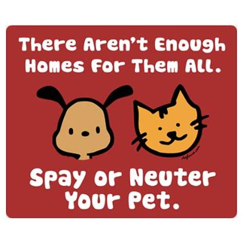 where to get spayed for free prevent a litter fix your critter cayo animal welfare society