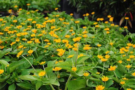 Jual Bibit Bunga Mawar Aneka Warna bunga bunga duniapelajar 11 november 2014 hallo dias