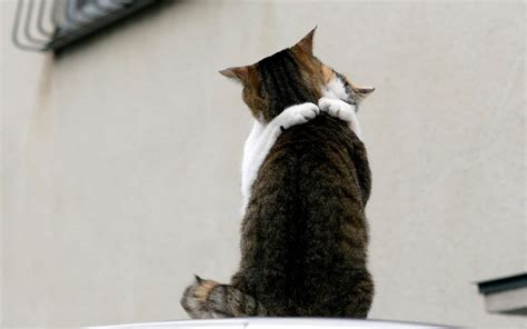 cat hugs cat hugs cats wallpaper 16122344 fanpop