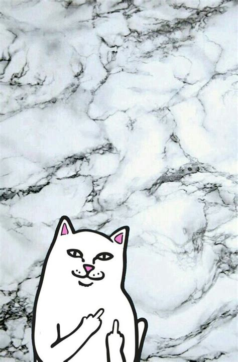 cat ripping wallpaper 27 best iphone wallpapers images on pinterest