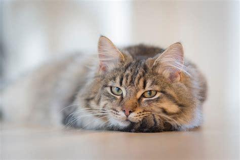 yellow tabby cat  stock photo