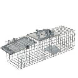 cat traps home depot havahart medium easy set live animal cage trap 1084 the