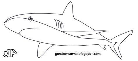 mewarnai ikan hiu belajar mewarnai gambar