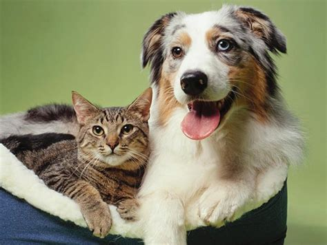 are cats or dogs smarter cats vs dogs which pet is smarter ny daily news