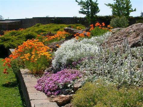 piante giardino roccioso giardino roccioso il potatore