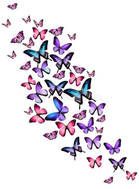 varias imagenes background css muitas borboletas diferentes no fundo branco imagem de