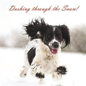 dogs trust dashing through the snow christmas cards buy