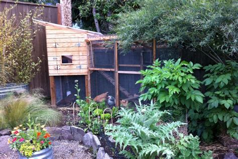 amazing chicken coop design ideas hgtv