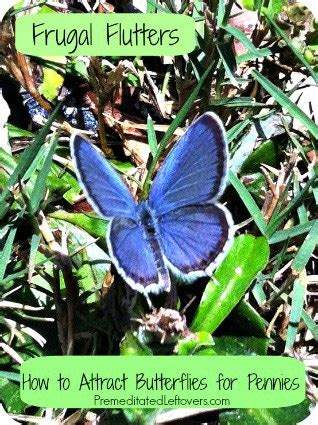 how to attract butterflies to your backyard 6 frugal ways to attract butterflies to your yard
