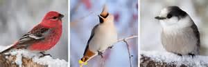 workshop on identifying minnesota birds cultural center