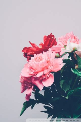 peonies bouquet 4k hd desktop wallpaper for 4k ultra hd tv