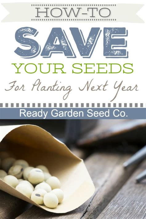 ready gardens   save  seeds  planting