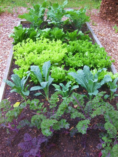 pictures of a garden the easy kitchen garden