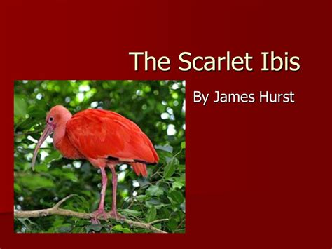 Themes Of Scarlet Ibis By James Hurst | the scarlet ibis by james hurst ppt video online download