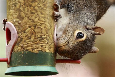 tips for a squirrel proof bird feeder