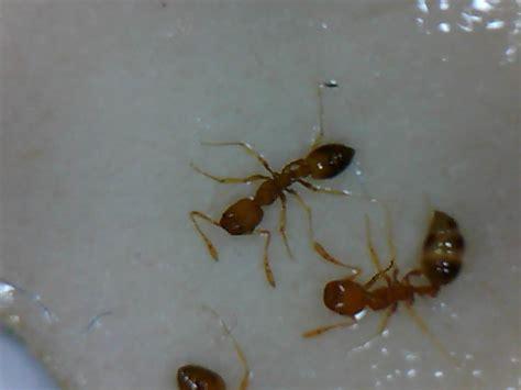 Ameisen Im Blumentopf In Der Wohnung by Ameisen Im Blumentopf Beautiful Natrliche Hausmittel