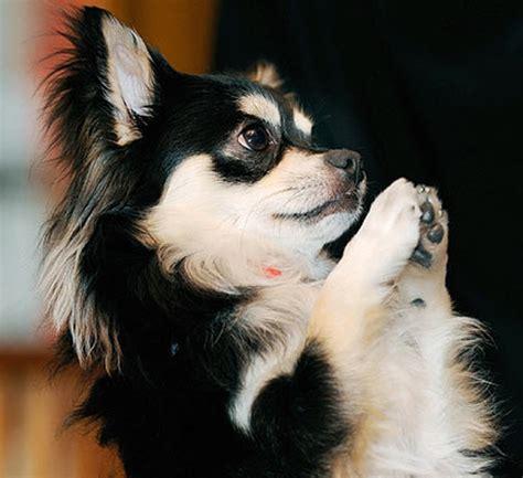 puppy praying praying talk