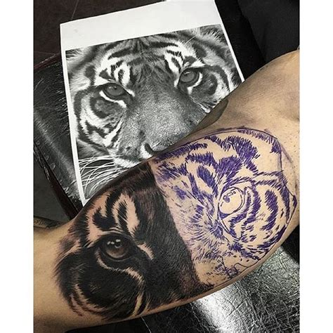siberian tiger tattoo designs 33 best siberian tiger tattoos images on