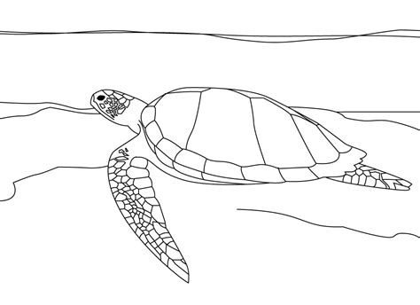 coloring page turtles printable free printable sea turtle coloring pages for