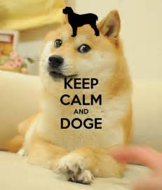Doge Meme Pictures - doge meme backgrounds www imgkid com the image kid has it