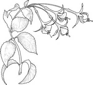 Rainforest Plants Coloring Pages Coloring Pages Rainforest Plants Coloring Pages