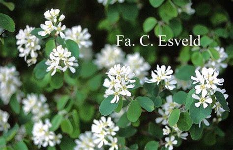Japanischer Garten Pflanzen 352 by Pflanzen In Nanopics Blumen Hartriegel Strauch Herbst