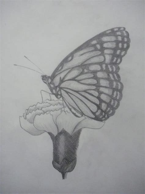 imagenes de mariposas a lapiz mariposa dibujada a lapiz dibujo pinterest