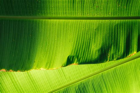gambar alam menanam bidang sinar matahari bunga