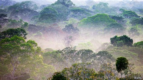 Forest Mba Closing by Cutting On Cutting The Rainforest