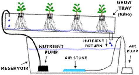 menanam hidroponik sistem nft hidroponik sistem nft cara menanam sayuran hidroponik