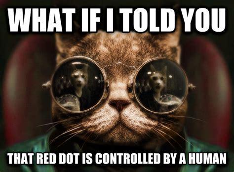 Cat Facts Meme - livememe com morpheus cat facts