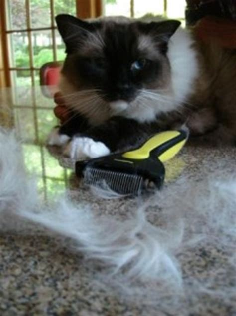 shedmonster cat shedding tool product review