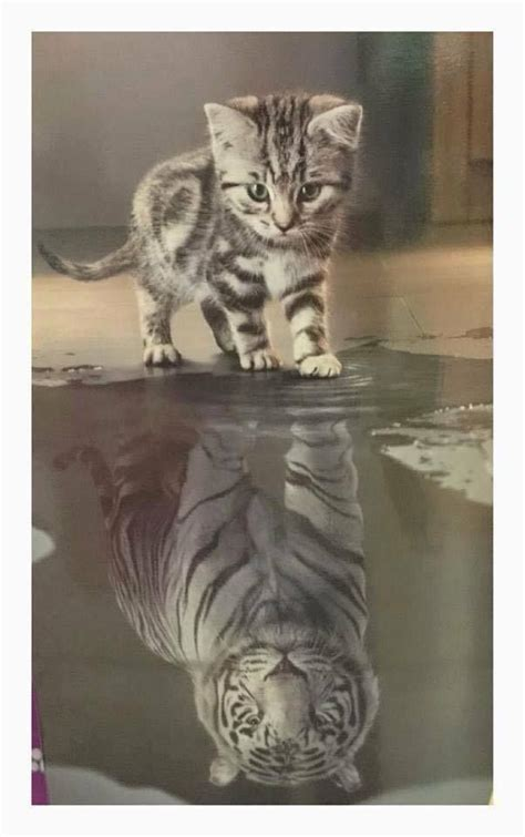 Cat Mirror cat and tiger mirror www pixshark images galleries