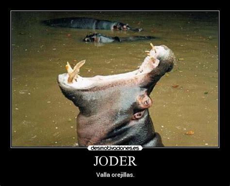 imagenes animales bostezando im 225 genes y carteles de hipopotamo pag 9 desmotivaciones