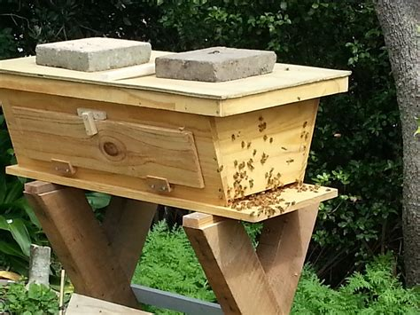 beekeeping top bar hive animals on pinterest beekeeping chicken feed and rabbits
