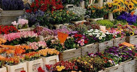 fiera dei fiori torna la fiera dei fiori di piancogno turismo valle camonica