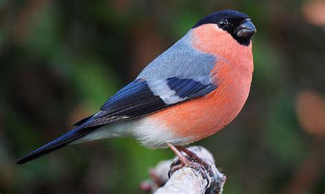 backyard birder complete guide to british garden birds garden wildlife