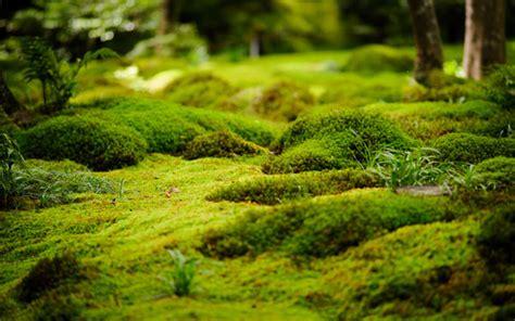 moss as decoration in gardens outdoortheme com