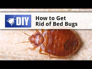 how to get rid of bed bugs tips mp3downloadonline