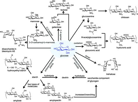 carbohydrates article carbohydrate nanocarriers in biomedical applications